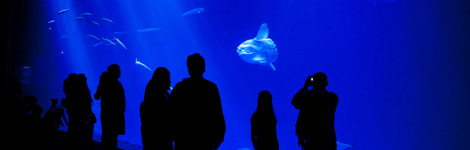 Sacramento Photographer | William Foster - monterey bay aquarium open sea